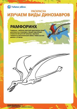 Раскраска динозавры: рамфоринх
