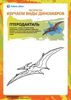 Раскраска динозавры: птеродактиль