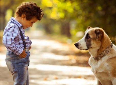 Что делать, если ребенок боится животных