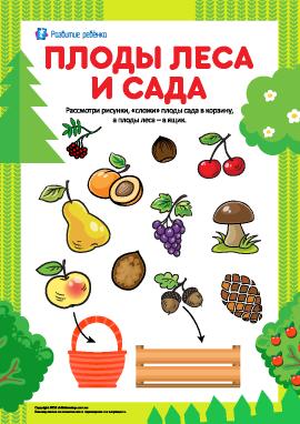 Учимся различать плоды леса и сада