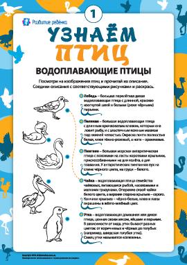Раскрашиваем и узнаем водоплавающих птиц