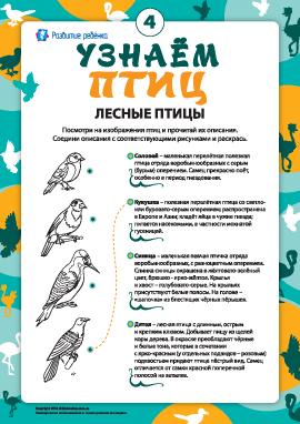 Раскрашиваем и узнаем лесных птиц