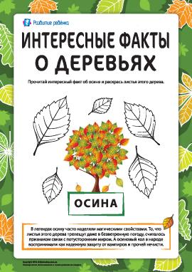 Интересные факты о деревьях: осина