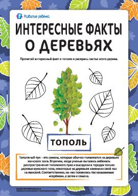 Интересные факты о деревьях: тополь