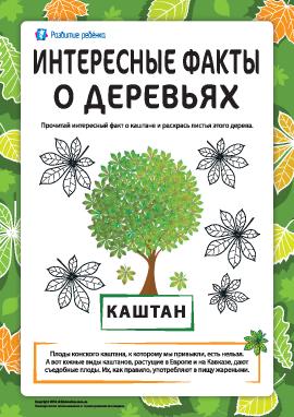Интересные факты о деревьях: каштан