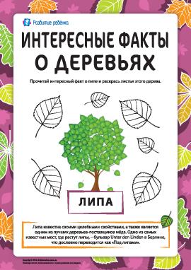 Интересные факты о деревьях: липа