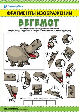 Бегемот: ищем фрагменты изображений