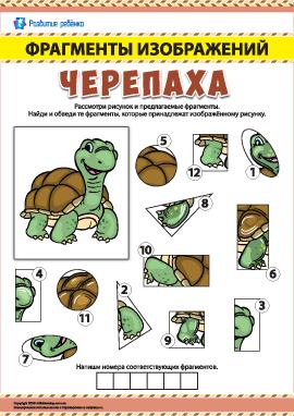 Черепаха: ищем фрагменты изображений