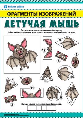 Летучая мышь: ищем фрагменты изображений