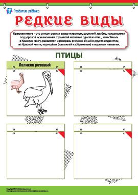 Изучаем редкие виды птиц