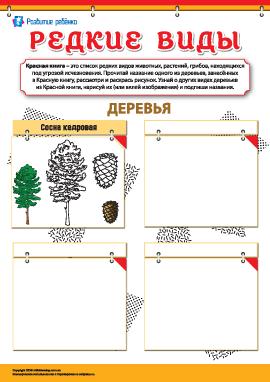 Изучаем редкие виды деревьев