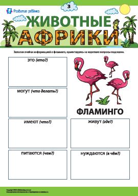 Рассказываем о фламинго