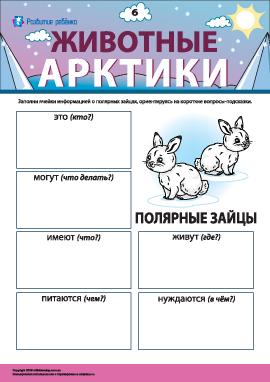 Рассказываем о полярных зайцах