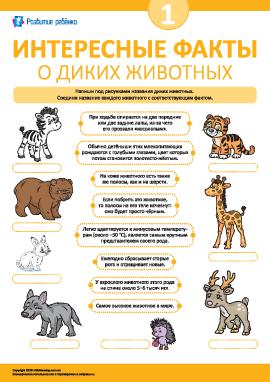 Узнаем интересные факты о диких млекопитающих