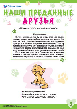Истории о преданных животных: кот Мистер Бу