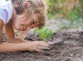 Увлекательная экология для младших школьников