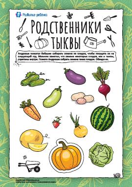 Родственники тыквы: «собираем» семена